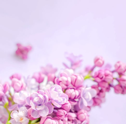 flowers-banner-large-min